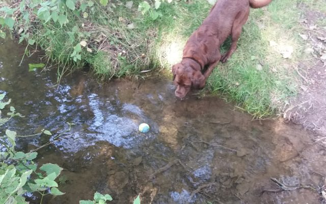Godmanchester Nature Reserve Dog walk in Cambridgeshire