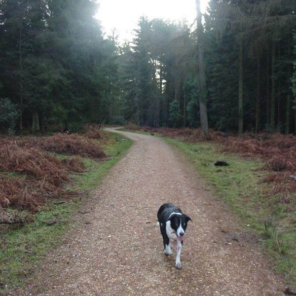 Dog walk at Gods Hill