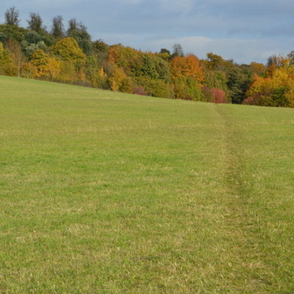 Dog walk at Gog Magog Hills
