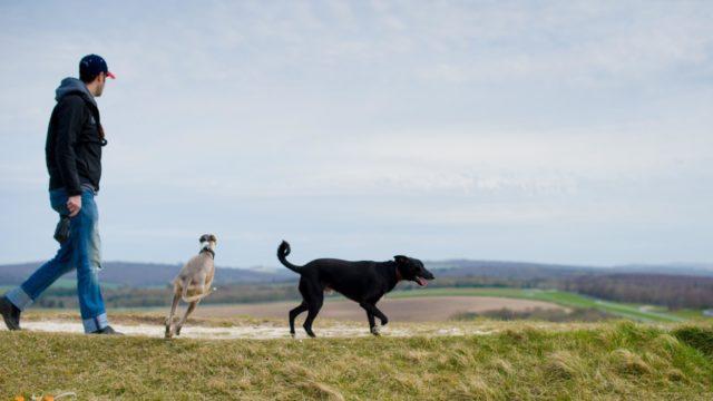 Dog walk at Goodwood