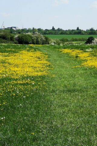 Dog walk at Grantchester Meadows photo