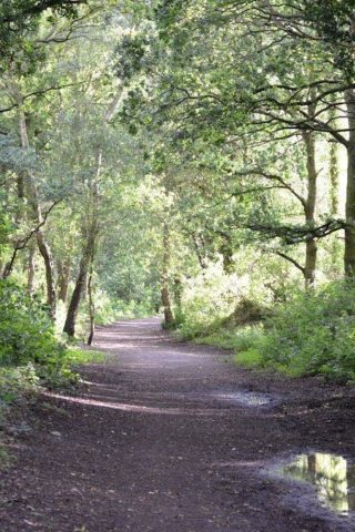 Dog walk at Granville Country Park photo