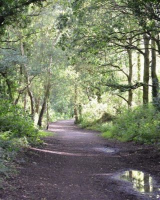 Dog walk at Granville Country Park