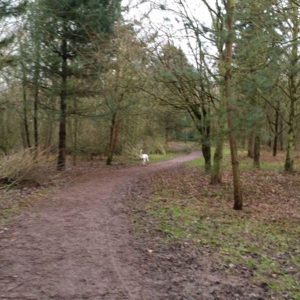 Dog walk at Grappenhall Heys