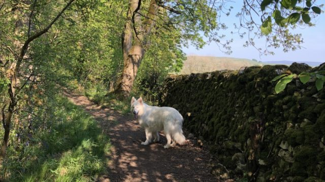Dog walk at Grass Woods, Grassington