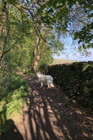 Dog walk at Grass Woods, Grassington photo