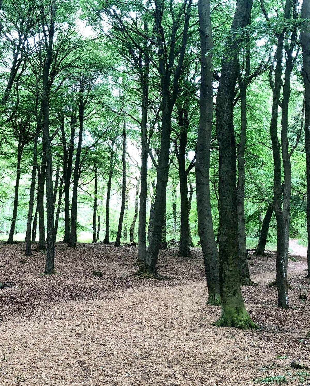 Grass Woods, Grassington large photo 6