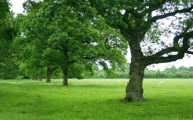 Great Chalfield Dog walk in Wiltshire