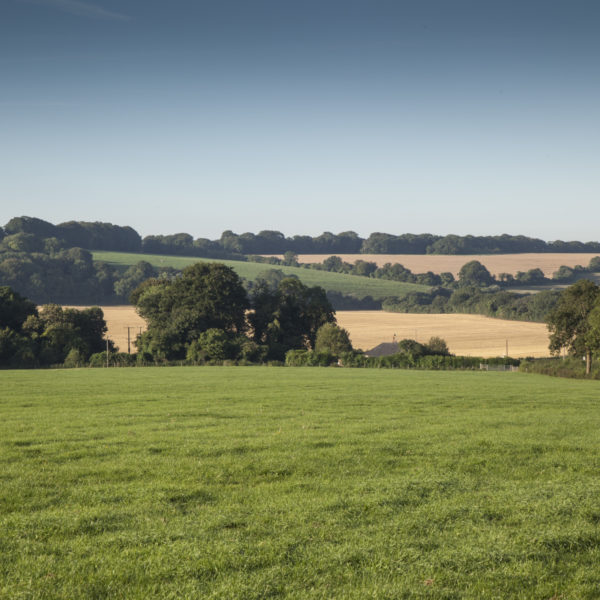 Great Sheardley Wood photo 1