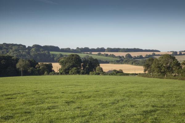 Great Sheardley Woodphoto