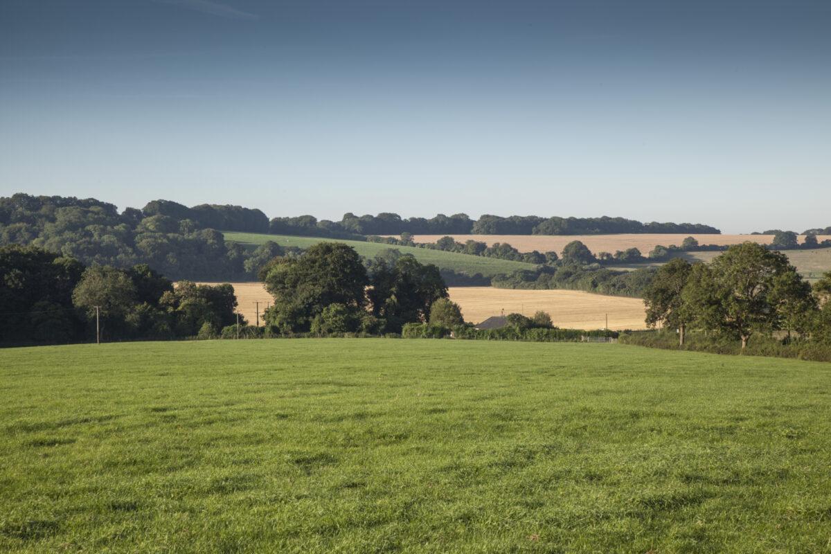 Great Sheardley Wood large photo 1
