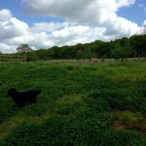 Green Lane Woods