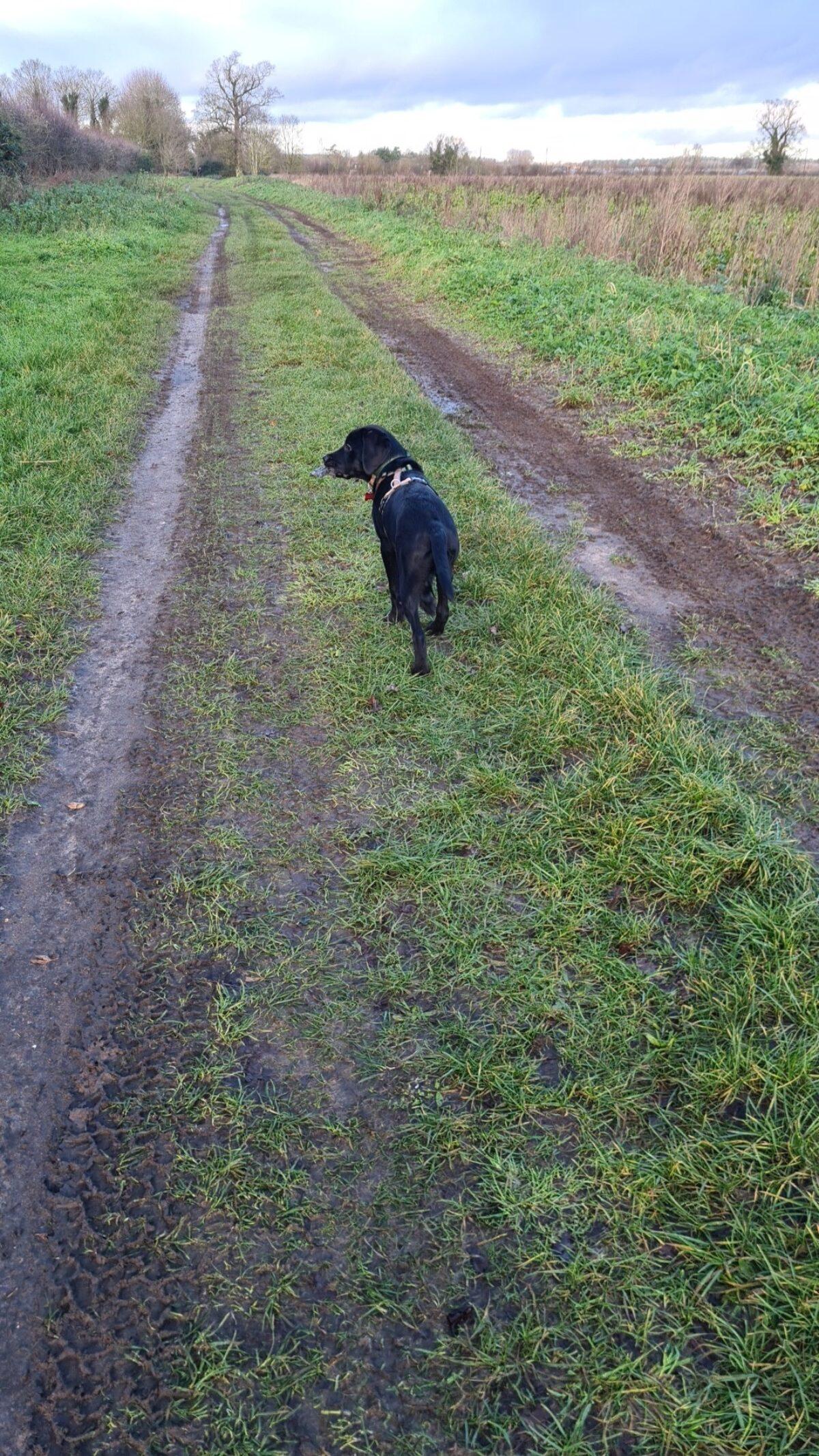 Green Lane large photo 1