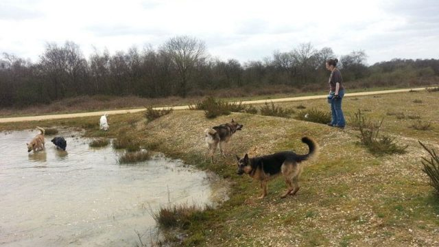 Dog walk at Greenham Common