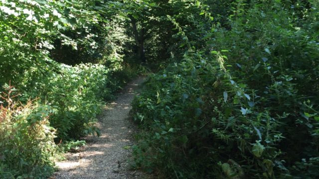 Dog walk at Grundy Moor Woods