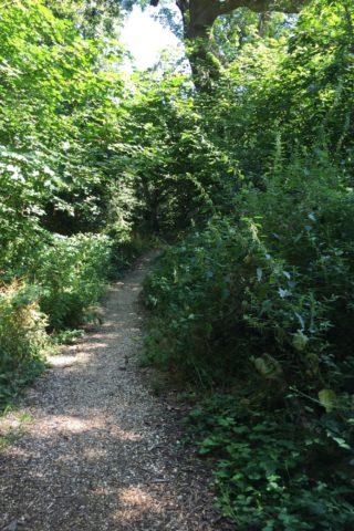 Dog walk at Grundy Moor Woods photo
