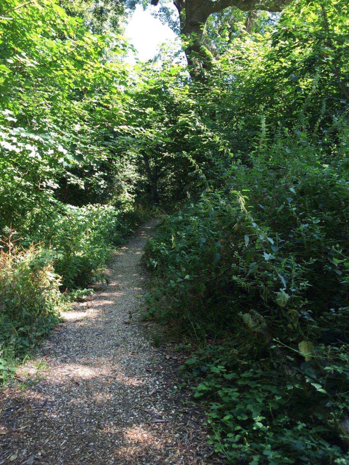Grundy Moor Woods large photo 1