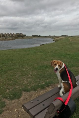 Dog walk at Gunners' Park to East Beach, Shoebury photo