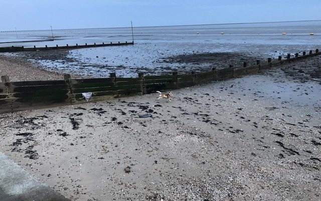 Gunners' Park to East Beach, Shoebury Dog walk in Essex