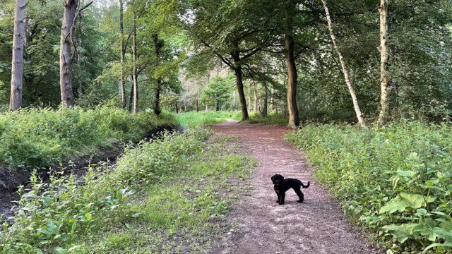 Dog walk at Hagg Wood