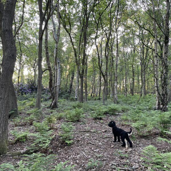 Hagg Wood photo 2