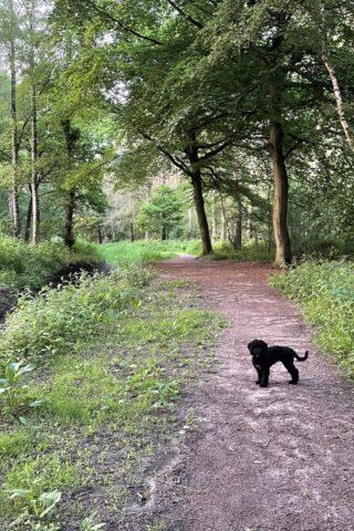Dog walk at Hagg Wood photo