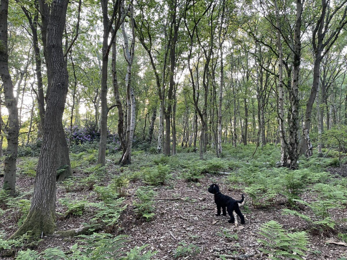 Hagg Wood large photo 2