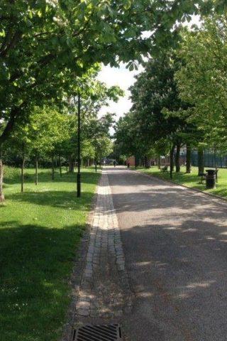 Dog walk at Haggerston Park, Hackney photo