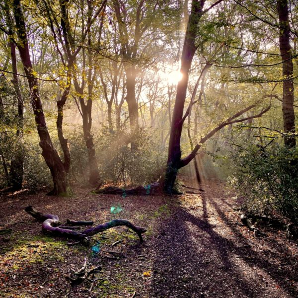Hainault Forest Adventure photo 1