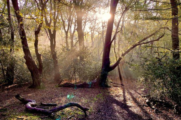 Hainault Forest Adventurephoto