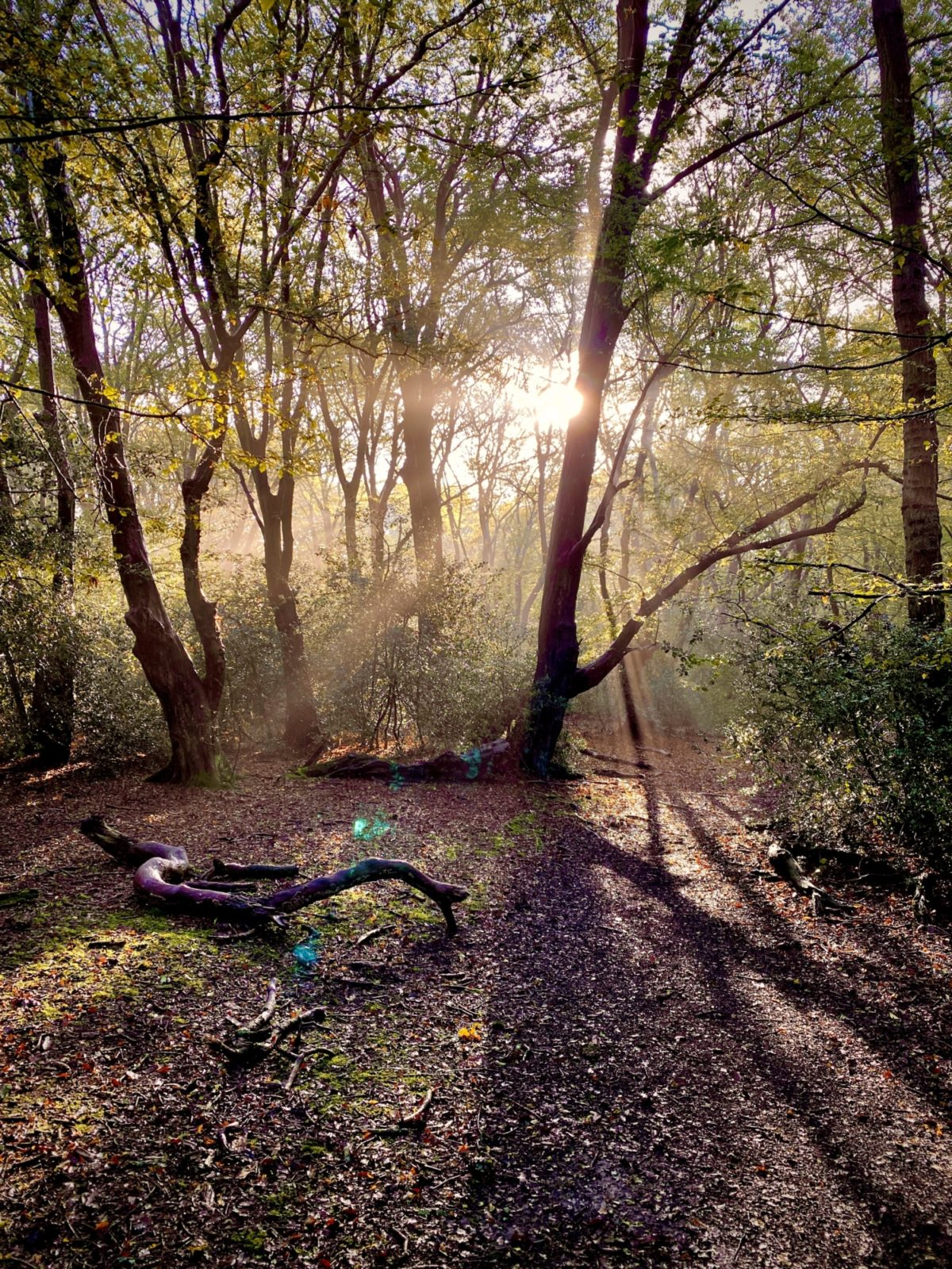 Hainault Forest Adventure large photo 1