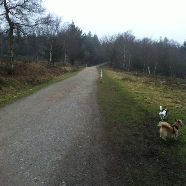 Dog walk at Haldon Forest Park