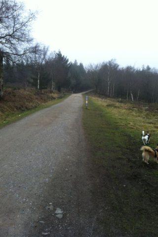 Dog walk at Haldon Forest Park photo