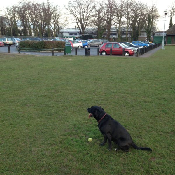 Dog walk at Hamble Recreation Ground