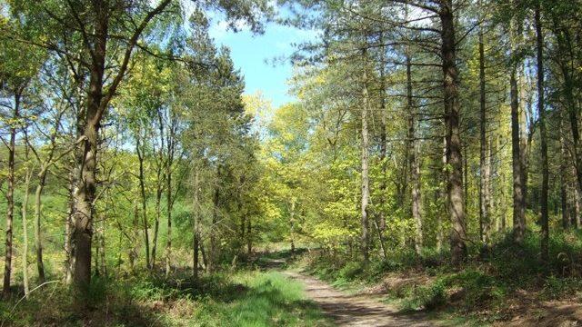 Dog walk at Hanchurch Woods