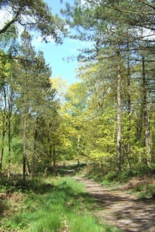 Dog walk at Hanchurch Woods photo