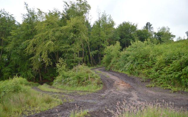 Hanchurch Woods Dog walk in Staffordshire