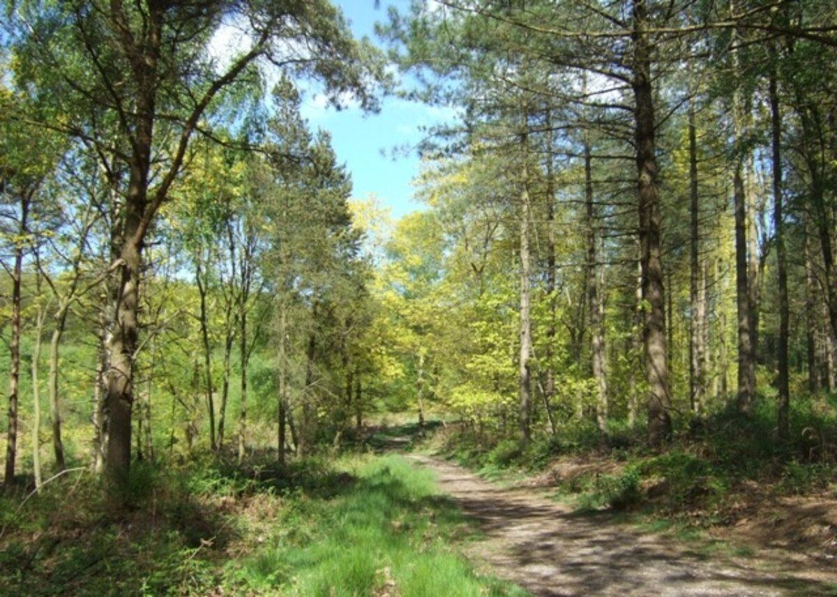 Hanchurch Woods large photo 1