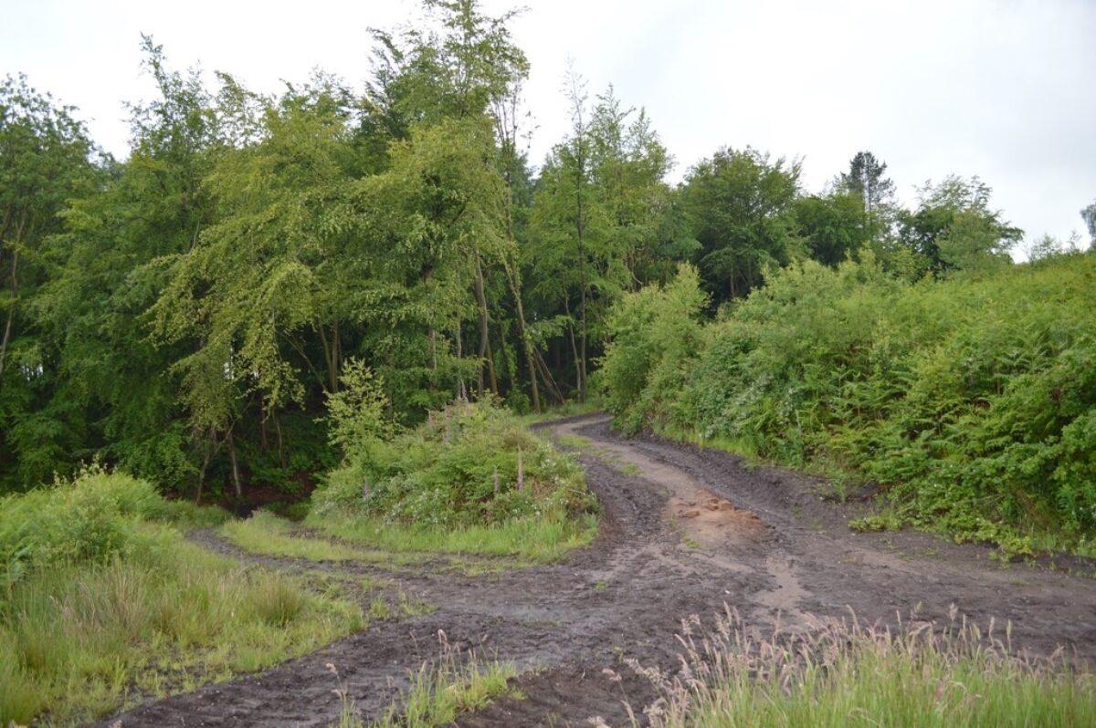 Hanchurch Woods large photo 3