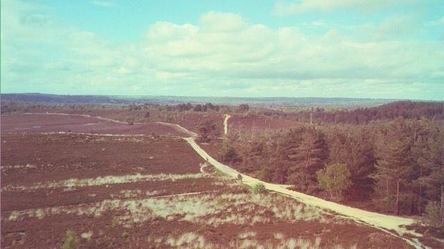 Dog walk at Hankley Common