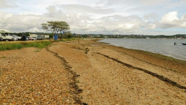 Dog walk at Harbourside Park (Baiter and Whitecliff)