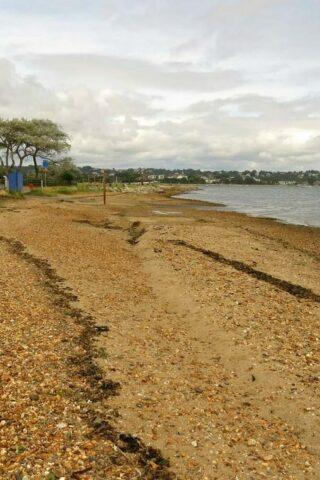 Dog walk at Harbourside Park (Baiter and Whitecliff) photo