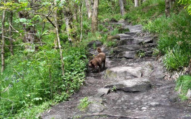 Hardcastle Crags Dog walk in Yorkshire (West)