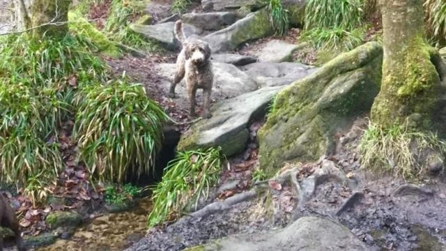 Dog walk at Hardcastle Crags