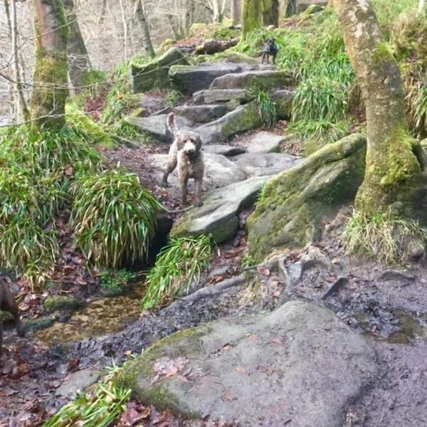 Hardcastle Crags photo 1