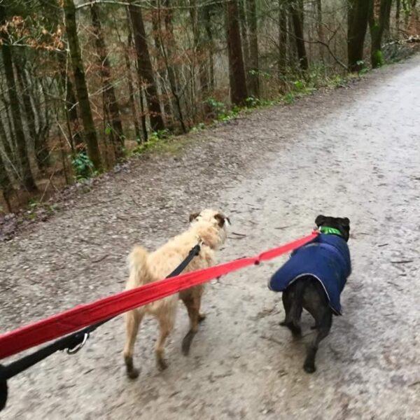 Dog walk at Hardcastle Crags