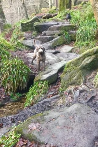 Dog walk at Hardcastle Crags photo