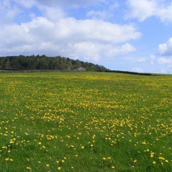 Dog walk at Harden Moor