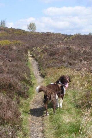 Dog walk at Harden Moor photo