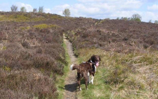 Harden Moor Dog walk in Yorkshire (West)
